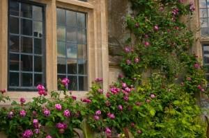 洋風の家と庭