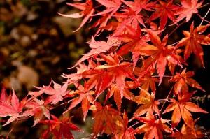 紅葉のイメージ2